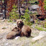 Where to Go Bear Watching in Canada